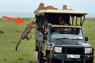 curious-cheetah